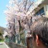 家島高等学校の入学式