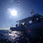 田辺の海底にたたずむ沈船にダイビング
