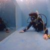 プールで体験ダイビングからのライセンス取得!