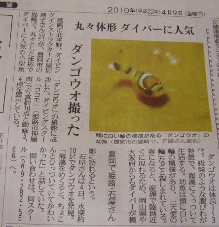 読売新聞|2010年4月9日|ダンゴウオ