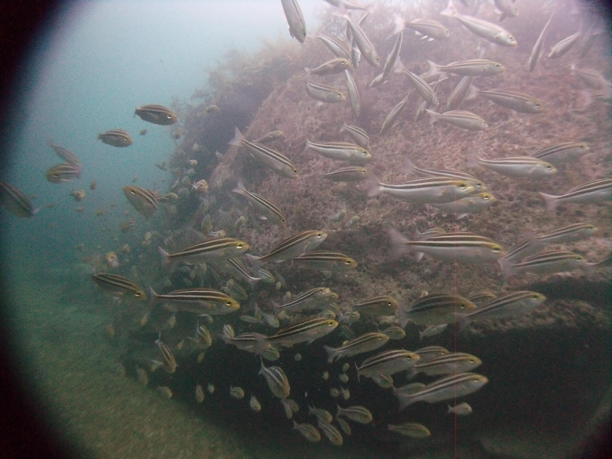 平日のんびり山陰ジオパーク(豊岡市竹野の海で)海底探索の巻(^O^☆♪