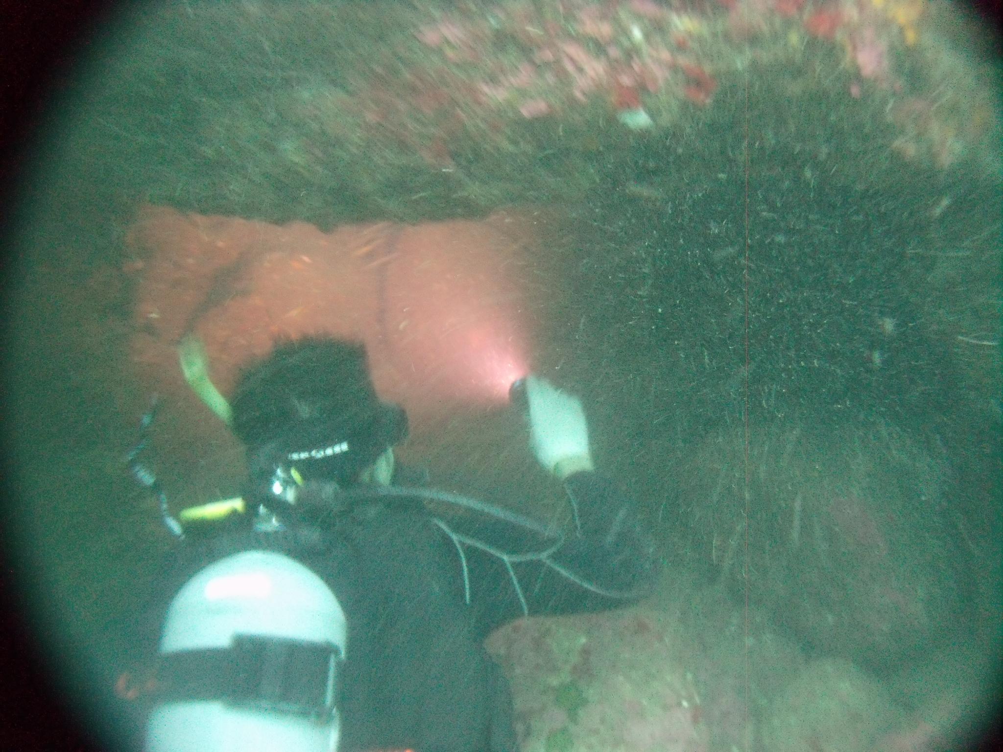 海底に広がる山陰ジオパークをスキューバダイビングで海底探索