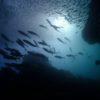 平日のゆったり田辺の海底で魚群に囲まれてみるの巻ヽ(^o^)丿