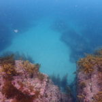 澄んだジオパークの海でダイビングライセンス取得