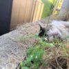 天気がよかったので、ノリにノッて、ブルーベリーを植えました!(^^)!