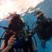 ジュニアダイバー、親子でココモプールダイビング