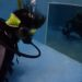 ココモ店内プールでダイビングライセンス取得!